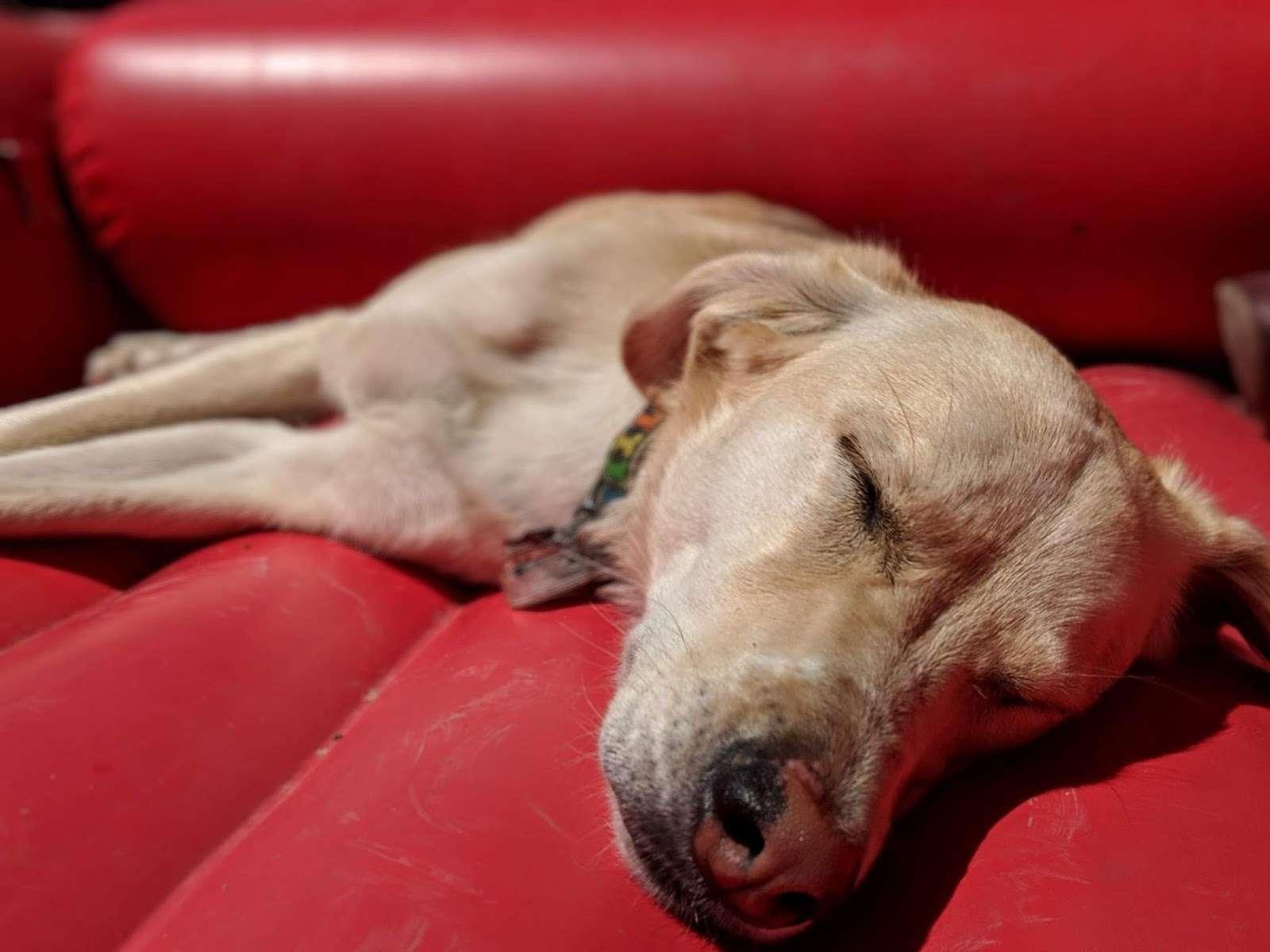 Chola3 – dog
